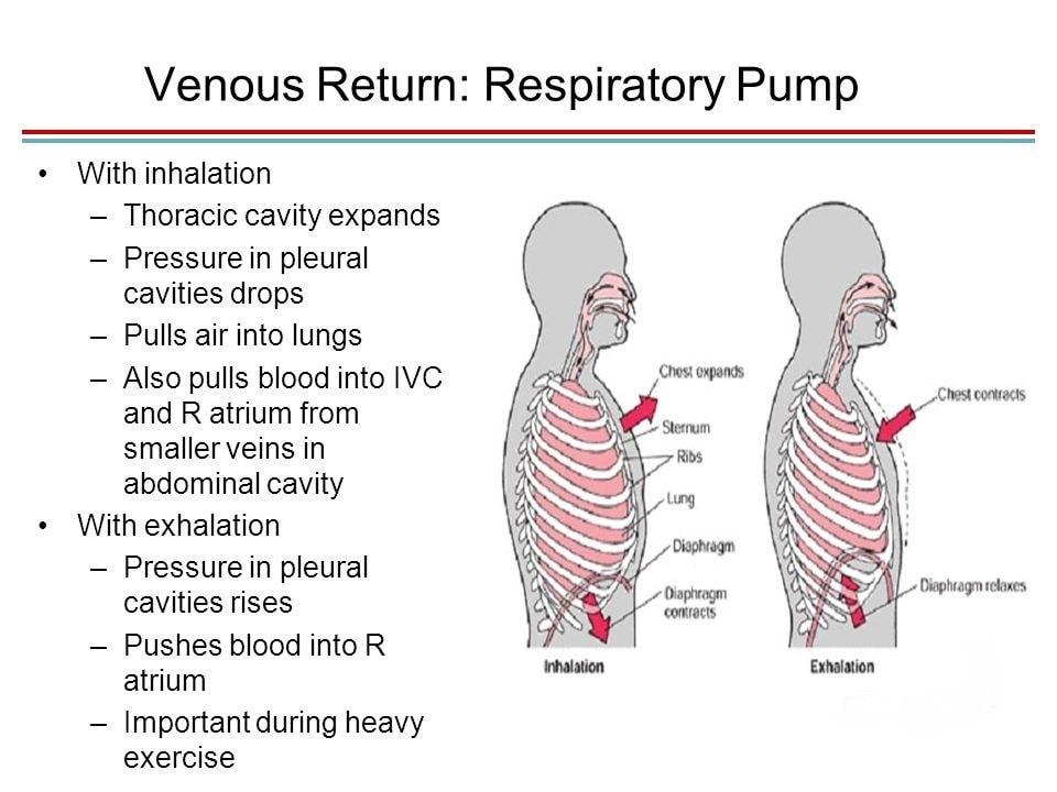 Table 3.2 respiratory pump